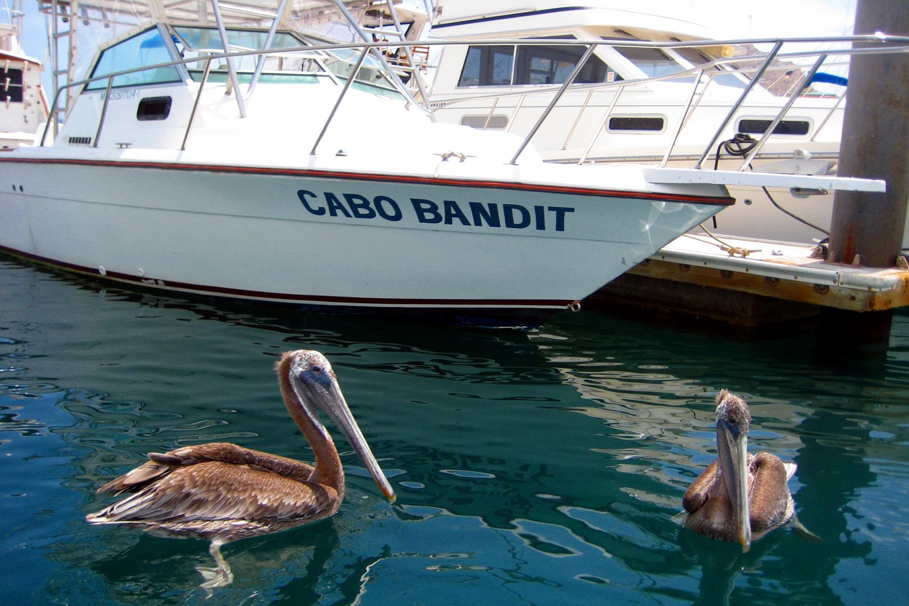 Cabo San Lucas Cruises, Mexico - P&O Cruises: 2018 & 2019 ...