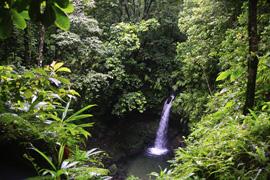 Cayo Levantado (Samana), Dominican Republic